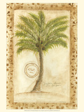 Fan Palm Posters by Marianne D. Cuozzo