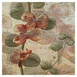 Desert Botanicals I Premium Giclee Print by John Butler
