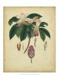 Engelmann Botanical I Poster von  Engelmann