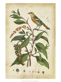 Antique Bird in Nature IV Giclee Print
