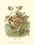 Golden Crowned Kinglet & Nest Prints