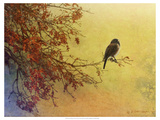 Snow Oak Junco Premium Giclee Print by Chris Vest