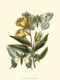 Butterfly Oasis II Prints