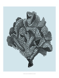 Coral on Aqua IV Print