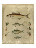 Pisces Composition II Posters