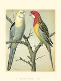Cassell's Parrots I Poster par  Cassell