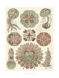 Sophisticated Sealife IV Art by Ernst Haeckel