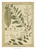 Diderot Antique Ferns I Kunstdruck von Daniel Diderot