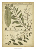 Diderot Antique Ferns I Print by Daniel Diderot