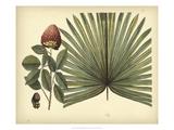 Antique Brazilian Palm Poster von Sir Hans Sloane