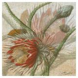 Desert Botanicals II Prints by John Butler