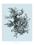 Coral on Aqua III Prints