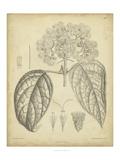 Vintage Curtis Botanical I Poster von Samuel Curtis