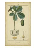 Vintage Turpin Botanical II Print by  Turpin