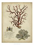 Imperial Coral IV Plakát