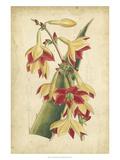 Curtis Tropical Blooms III Plakater af Samuel Curtis