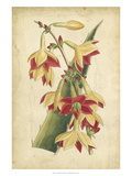 Samuel Curtis - Curtis Tropical Blooms III - Reprodüksiyon