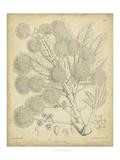 Vintage Curtis Botanical IV Kunstdrucke von Samuel Curtis