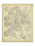 Vintage Curtis Botanical IV Art by Samuel Curtis