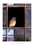 Bluebird Window Giclée-Premiumdruck von Chris Vest
