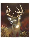 Deer Portrait Premium Giclee Print by Leo Stans