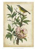 Antique Bird in Nature II Poster