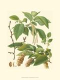 Pinecones & Foliage I Poster