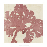 Brilliant Seaweed V Prints
