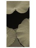 Lotus II Prints by Tang Ling