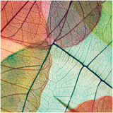 Colourful Leaves II Poster by Jim Christensen