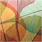 Colourful Leaves I Print by Jim Christensen