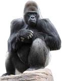 Gorilla Poutače se stojící postavou