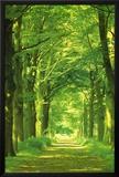 Forest Path Photo by Hein Van Den Heuvel