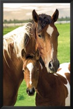 Horses - Mare & Foal Posters