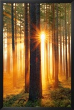 Forest Sunbeams Prints