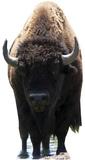 Bison Buffalo Figuras de cartón