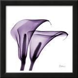 Violet Calla Twins II Posters by Albert Koetsier