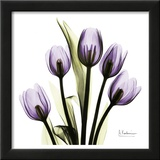 Tulip in Purple Print by Albert Koetsier