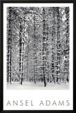 Bosque de pinos en la nieve, Parque Nacional de Yosemite, 1932 Reproducción por Ansel Adams