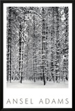 Pine Forest in Snow, Yosemite National Park, 1932 Art by Ansel Adams