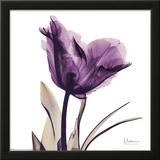 Royal Purple Parrot Tulip Wall Art by Albert Koetsier