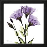 Gentian in Purple Prints by Albert Koetsier