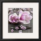 Magnolia Prints by Catherine Beyler