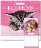 Keith Kimberlin Kittens - 2013 Calendar Calendars
