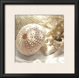 Coral Shell I Poster by Donna Geissler