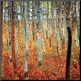 Birkenwald, ca. 1903 Aufgezogener Druck von Gustav Klimt