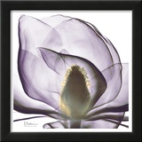 Precious Orchid in Purple Close Posters by Albert Koetsier