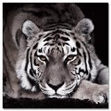 Tigra Negra Schilderij van Günter Lenz