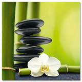 Bamboos & Stones Plakater