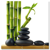 Bambou de la chance ou lucky bamboo (Dracaena Sanderiana) Art